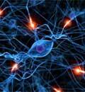 Sistema energetico e sistema nervoso