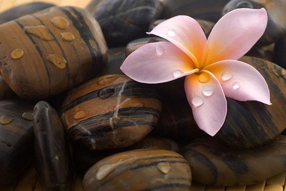 Il senso dello Zen