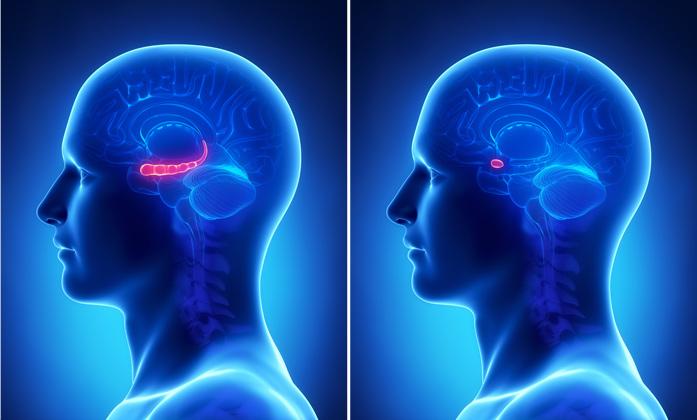 L'ippocampo (sinistra) e amigdala (destra) sembrano essere coinvolti nella gestione dell'ansia e di alcune facoltà come la memoria e l'apprendimento